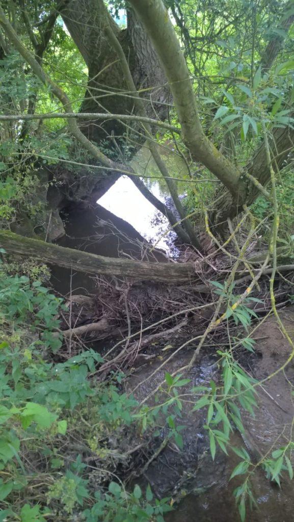 Natural woody debris along the Haseley Brook