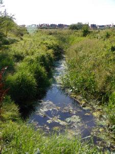 Thame Hardwick Brook confluence