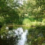 Thame River at Chearsley