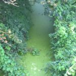 Eutrophication is just one problem caused by phosphate pollution