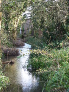 The habitat enhancement work completed by Watlington Environment Group, the water movement shows how the channel has been re-meandered.