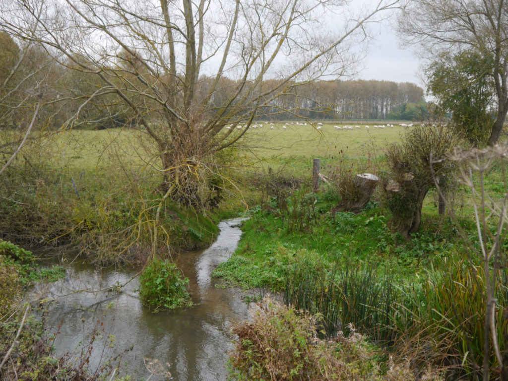 Haesley Brook meeting the River Thame