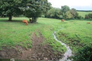 Cattle Impact
